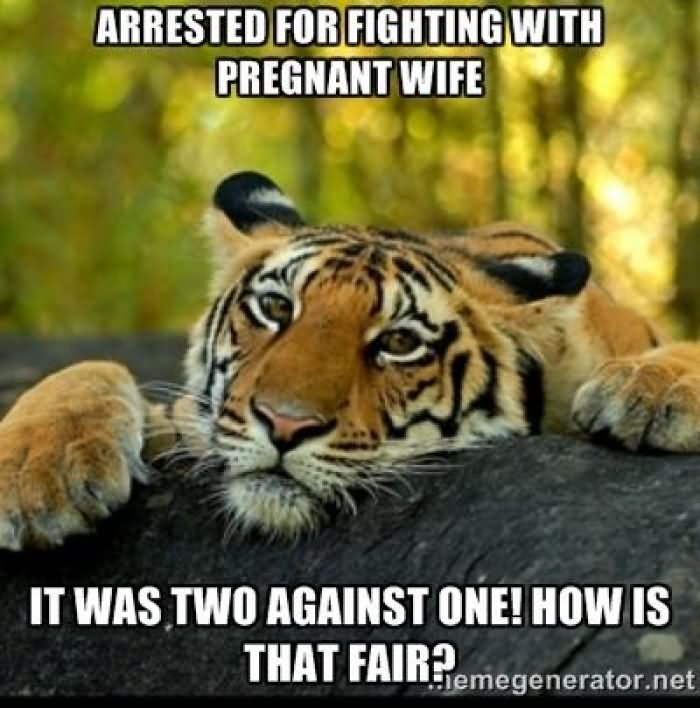 Arrested For Fighting With Pregnant Wife Funny Tiger Meme Picture arrested for fighting with pregnant wife funny tiger meme picture