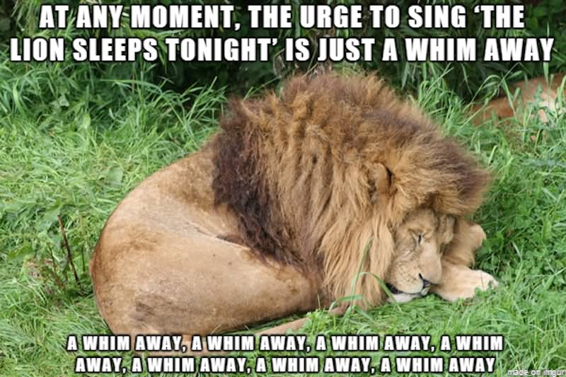 Funny Meme For Him : At any moment the urge to sing the lion sleeps tonight is just a
