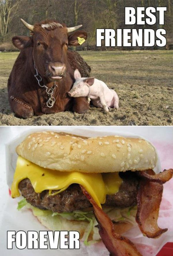 32 Very Funny Pigs Meme Photos And Pictures