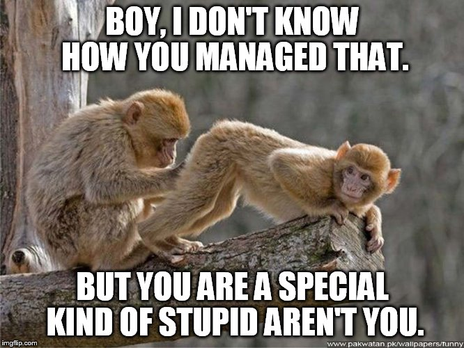 Boy I Don T Know How You Managed That Funny Monkey Meme Picture