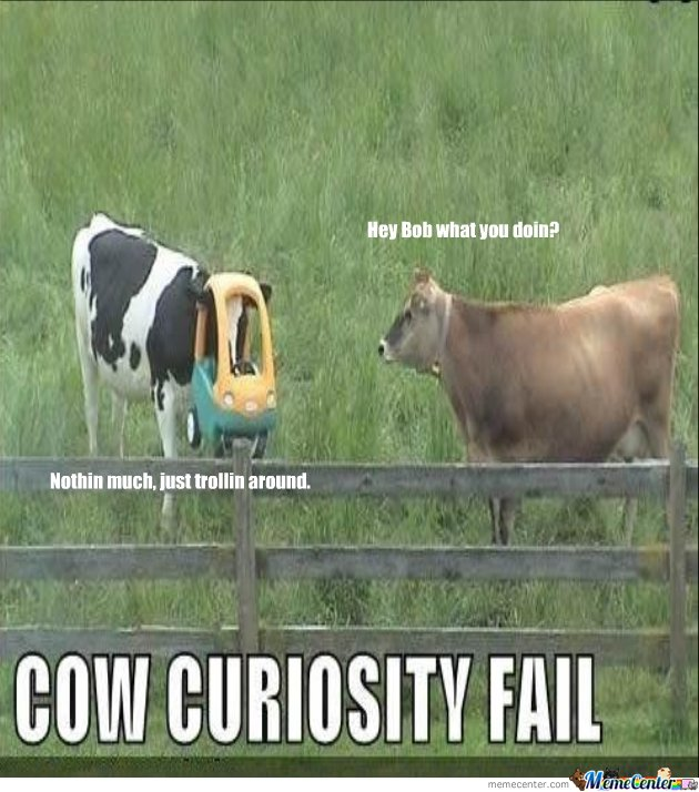 Cow Curiosity Fail Funny Meme Picture 30 very funny cow meme pictures and images
