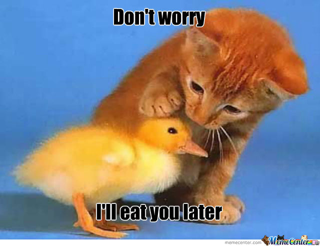 30 Most Funny Duck Meme Pictures And Images