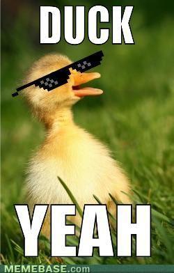 Duck Yeah Funny Meme Image For Whatsapp