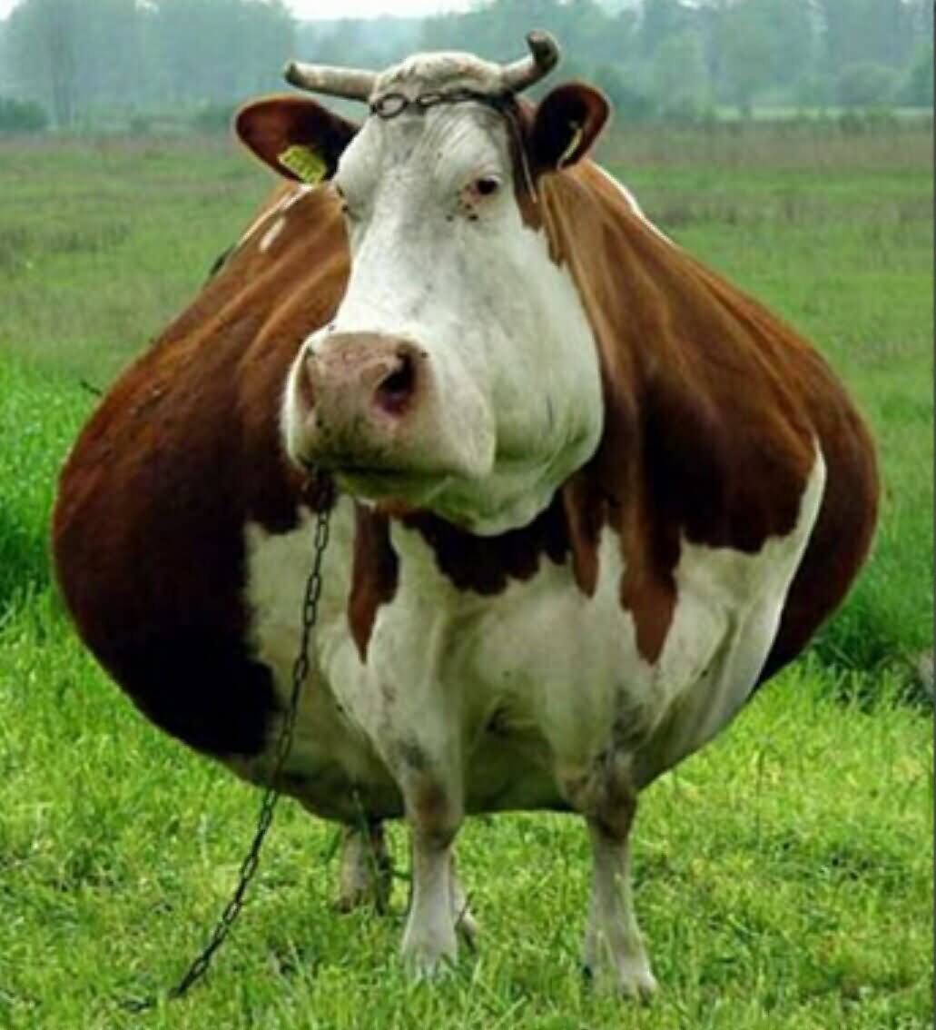 Image result for a picture of sad cows