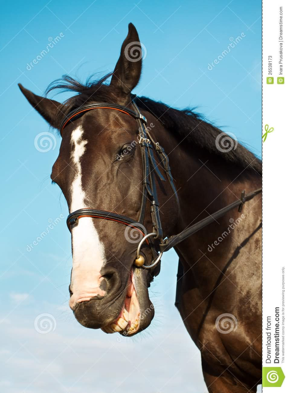 Funny Horse Smiling Face Image