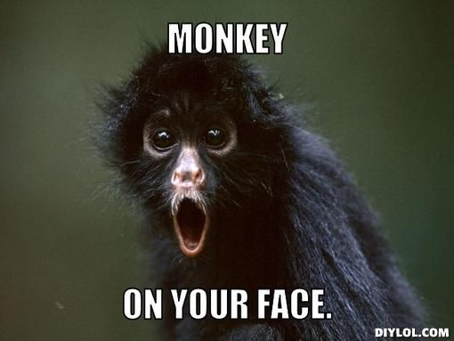 Funny Monkey Meme On Your Face Picture 35 very funny monkey meme photos and pictures,Dead Monkey Meme