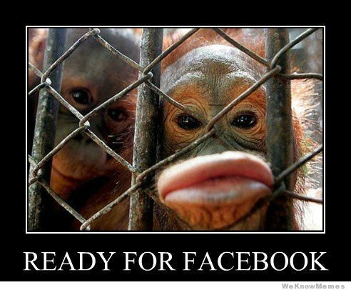35 Very Funny Monkey Meme Photos And Pictures