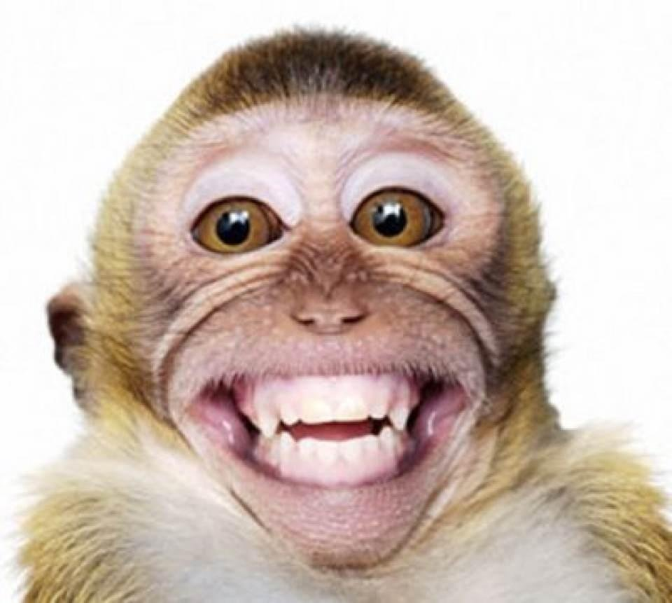Funny Monkey Smiling Face Image