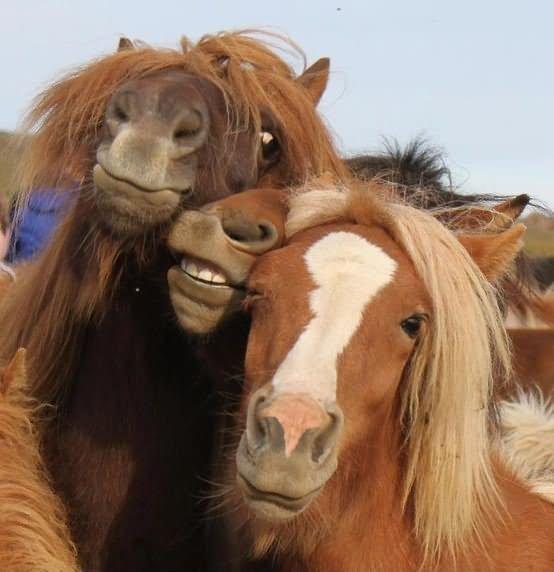 Funny Smiling Face Horses Taking Selfie