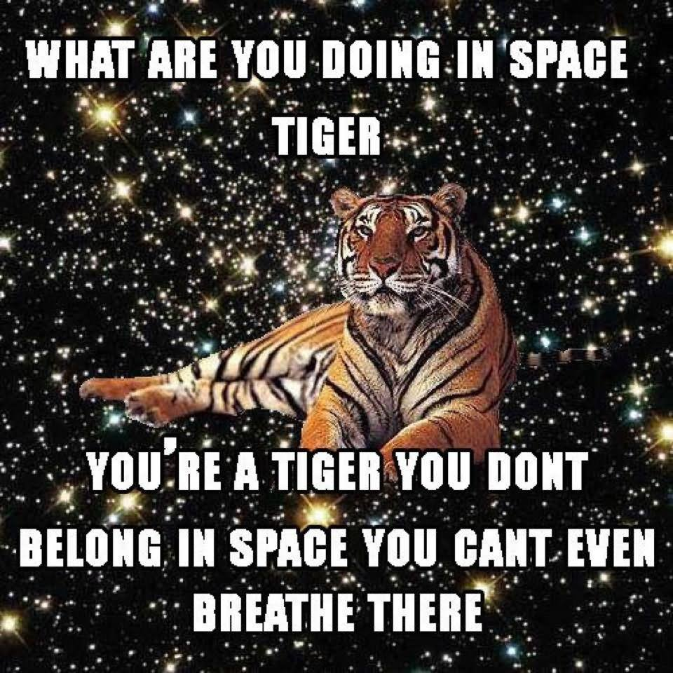 Funny Tiger Meme What Are You Doing In Space Tiger Image 40 most funniest tiger meme images and pictures,What Are You Doing Meme