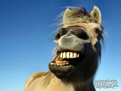 Funny Weird Laughing Horse Face Image