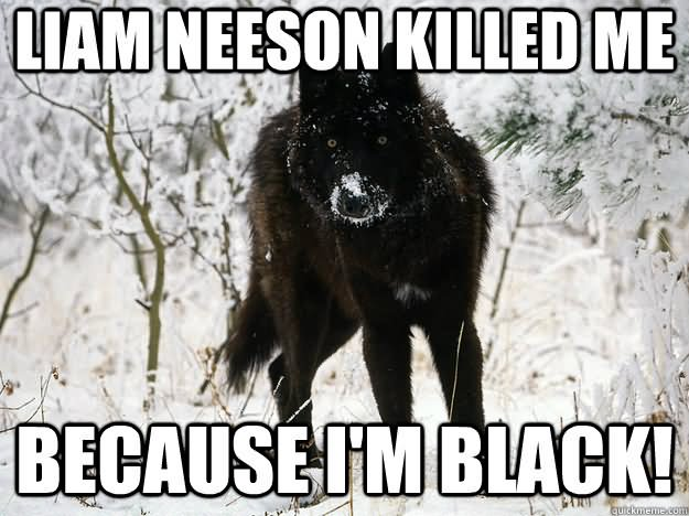 Funny Black Sheep Meme : Very funny wolf meme pictures that will make you laugh