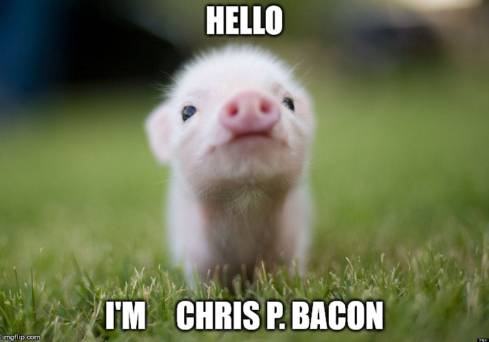 Funny Meme Hello : Very funny pigs meme photos and pictures