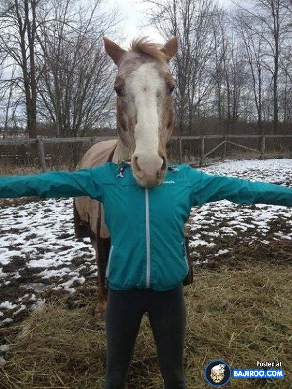 Horse And Boy Optical Illusion Face Funny Picture For Facebook