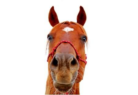 Horse With Serious Face Funny Photo