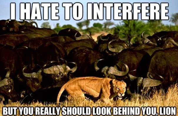 Funny Meme November : Very funny lion meme pictures and images
