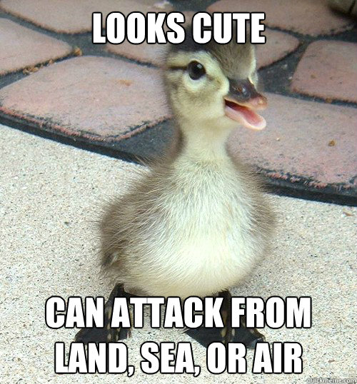 Looks-Cute-Can-Attack-From-Land-Sea-Or-Air-Funny-Duck-Meme-Picture.jpg