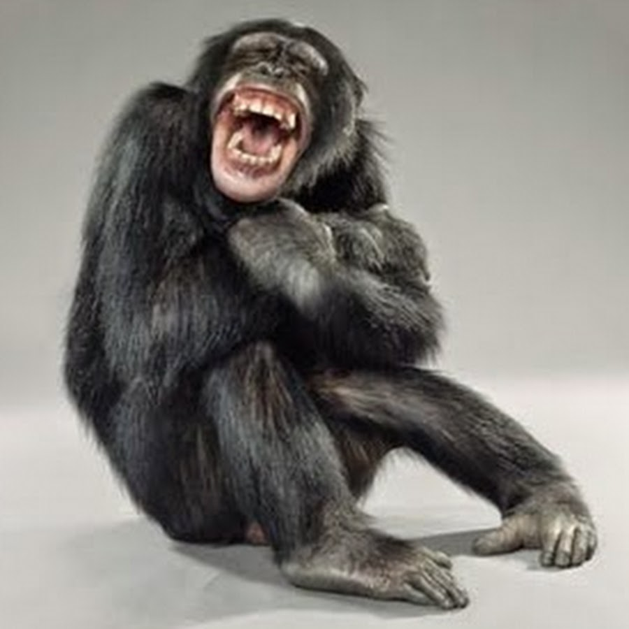 Monkey-Laughing-Face-Funny-Picture.jpg
