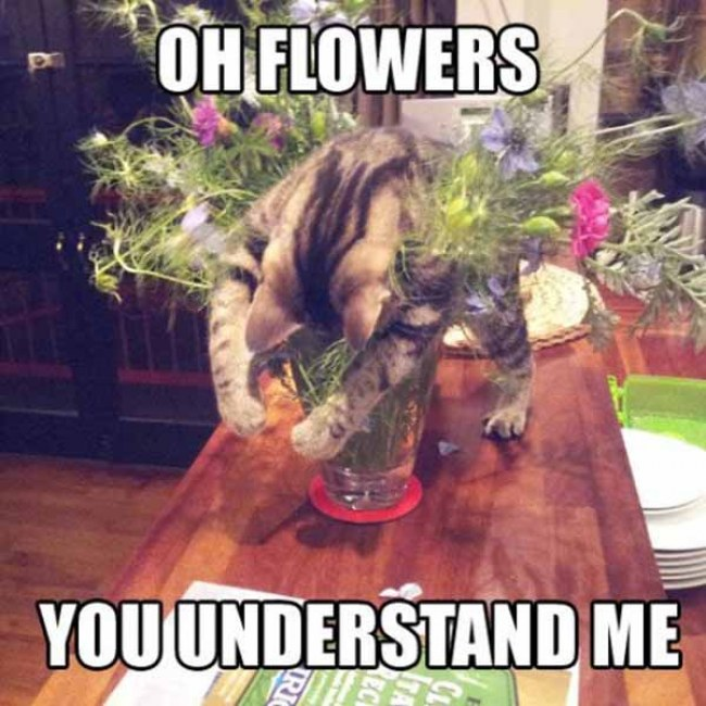 You Understand Me Meme 28 Very Funny Flower M...