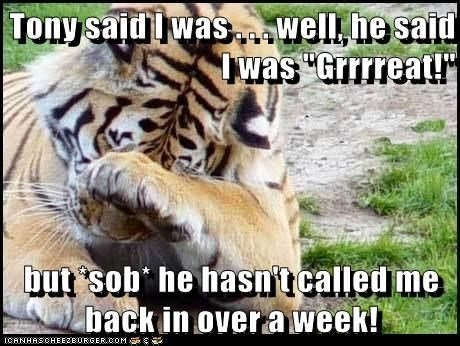 Tony Said I Was Well He Said I Was Great Funny Tiger Meme Image 40 most funniest tiger meme images and pictures