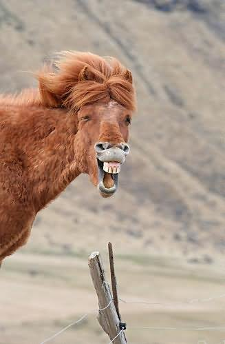 Very Funny Laughing Horse Image