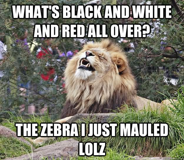 Funny Meme Black And White : Very funny lion meme pictures and images