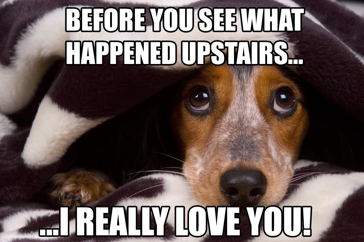 Funny Dog Memes: 30+ Most Funniest Sad Meme Pictures That Will Make You Laugh