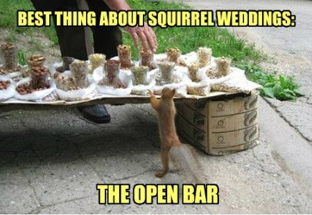 Best Thing About Squirrel Weddings The Open Bar Funny Meme Image dear santa nuts please funny squirrel meme image,Funny Squirrel Memes
