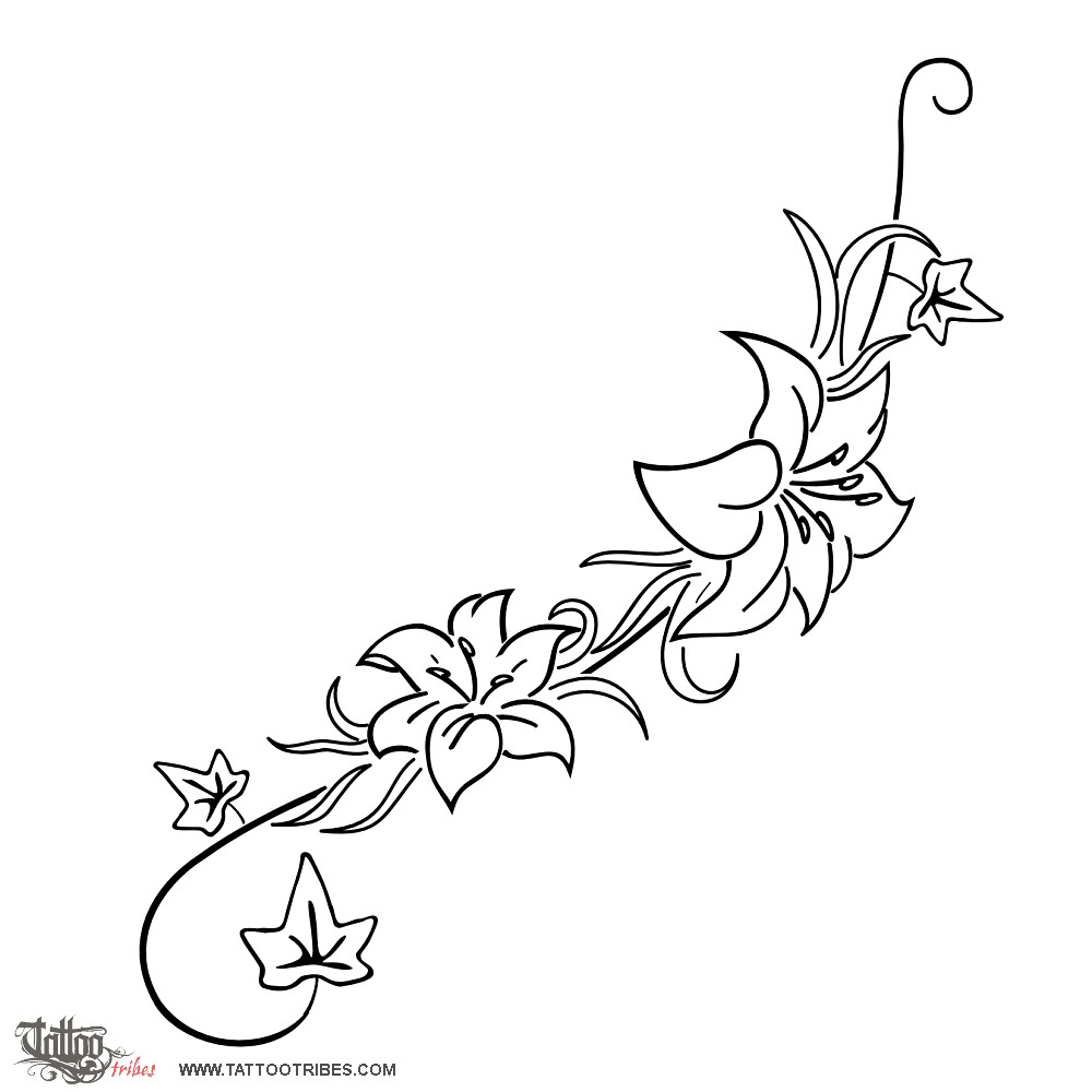 Flower Vine Line Drawing : Ivy outline gallery
