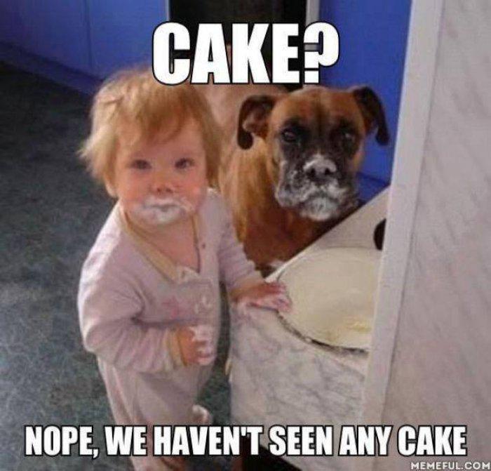 Birthday Cake Dog Meme ~ Dog birthday cake meme funny image