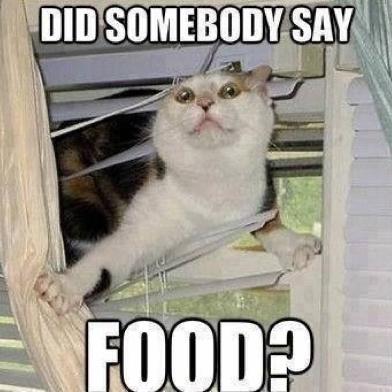 Funny Memes For Food : Did somebody say food funny meme picture