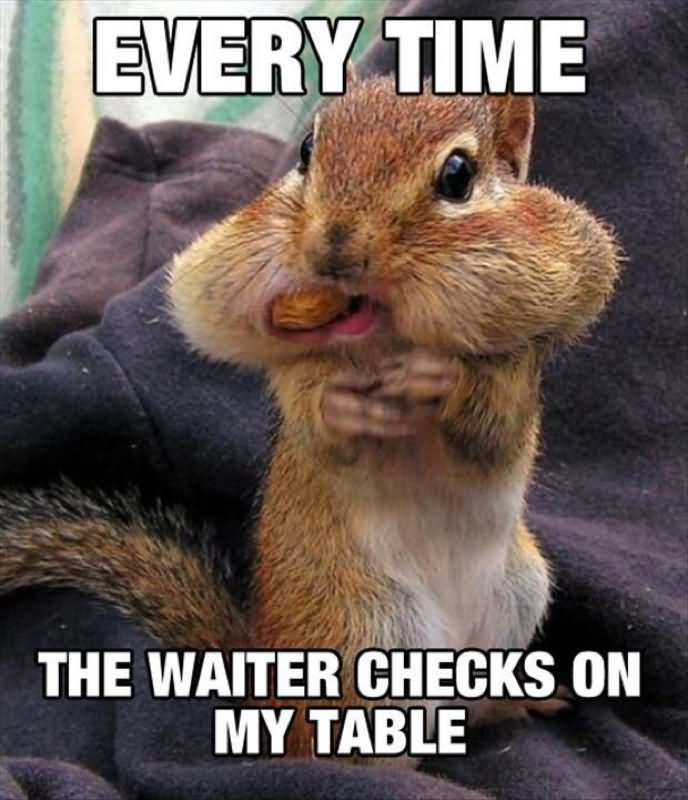 Every Time The Waiter Checks On My Table Funny Squirrel Meme Picture 35 very funny squirrel meme pictures and images,Funny Squirrel Memes