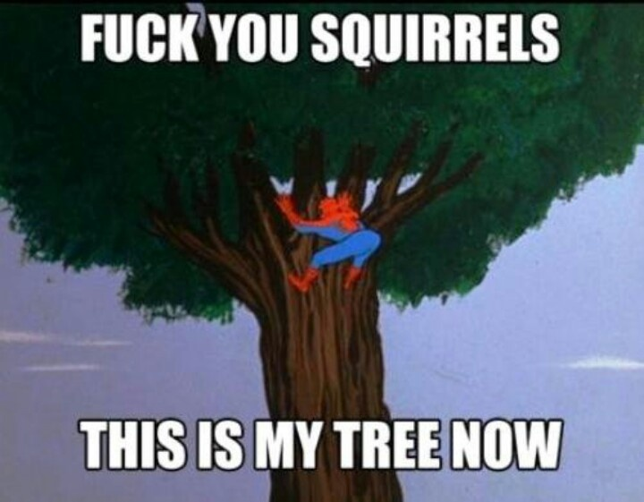 Fuck You Squirrels This Is My Tree Now Funny Meme Image