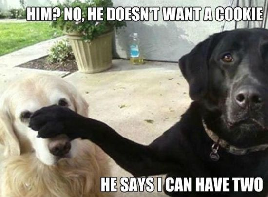 Funny Dog Memes: 45 Very Funny Cookies Meme Pictures That Will Make You Laugh