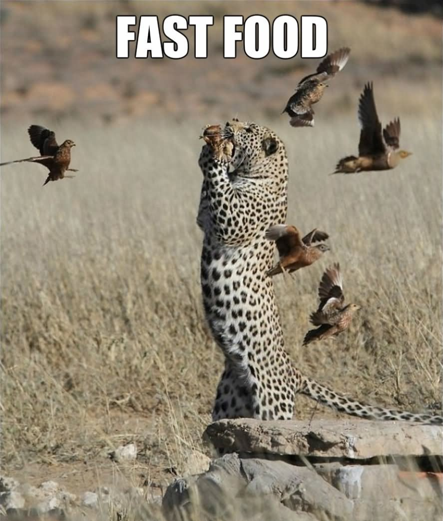 Funny Memes About Fast Food : Funny fast food meme image