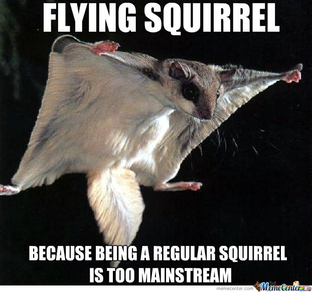 Funny Meme Photo : Most funniest squirrel meme pictures and photos