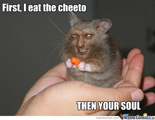 Funny Hamster Meme First I Eat The Cheeto Then Your Soul Picture dwarf hamster! aww
