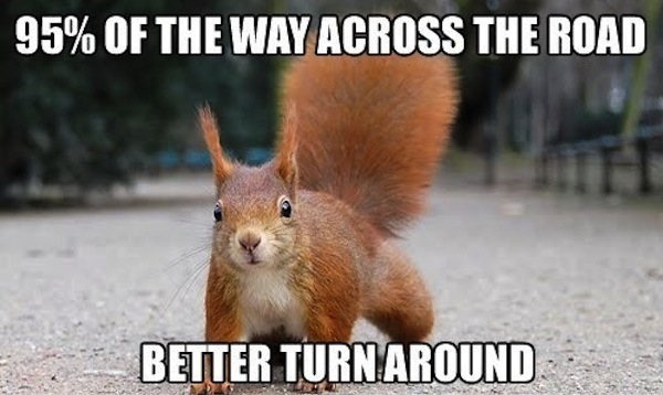 Funny Squirrel Meme 95 Percent Of The Way Across The Road Better Turn Around Image 31 most funniest squirrel meme pictures and photos,Funny Squirrel Memes