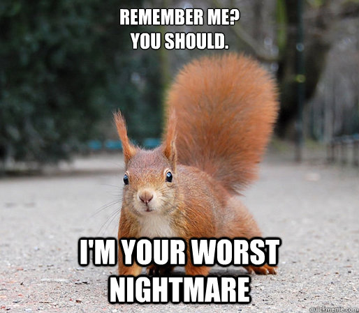 Funny Squirrel Meme I Am Your Worst Nightmare Funny Squirrel Meme Image 31 most funniest squirrel meme pictures and photos,Funny Squirrel Memes