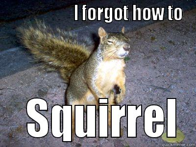 Funny Squirrel Meme I Forg How To Squirrel Image 31 most funniest squirrel meme pictures and photos,Funny Squirrel Memes