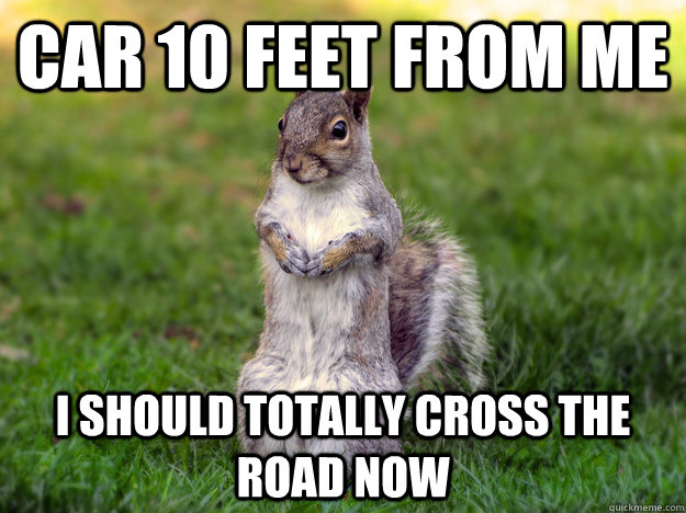 Funny Squirrel Meme I Should Totally Cross The Road Now Picture 31 most funniest squirrel meme pictures and photos,Funny Squirrel Memes