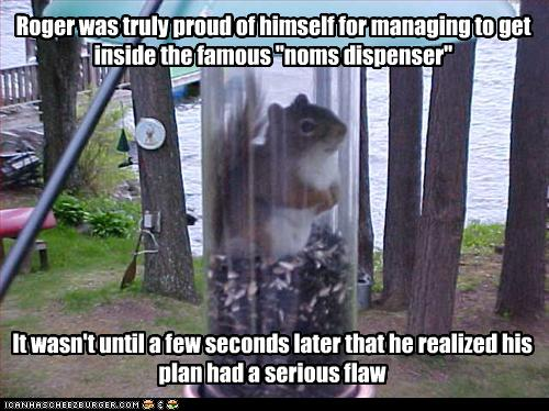 31 Most Funniest Squirrel Meme Pictures And Photos