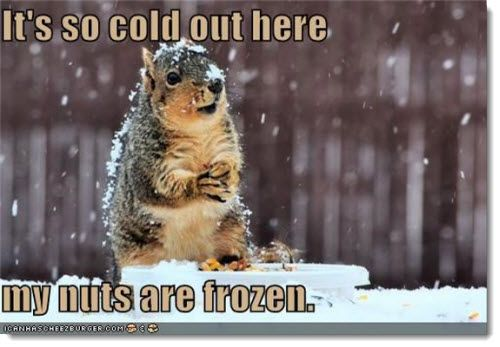 Funny Squirrel Meme Its So Cold Out Here My Nuts Are Frozen Picture 31 most funniest squirrel meme pictures and photos,Squirrel Meme Nuts