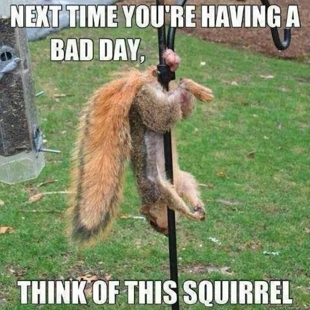 Funny Squirrel Meme Next Time You Are Having Bad Day Picture 31 most funniest squirrel meme pictures and photos