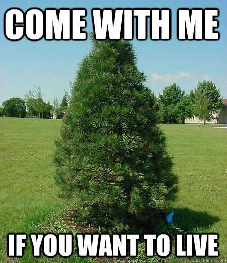 9 tree memes that are actually pretty funny