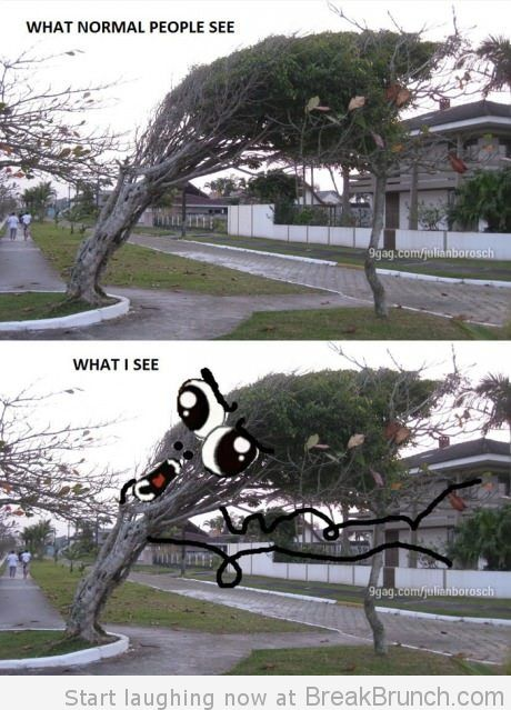 30 Most Funniest Tree Meme Pictures And Photos