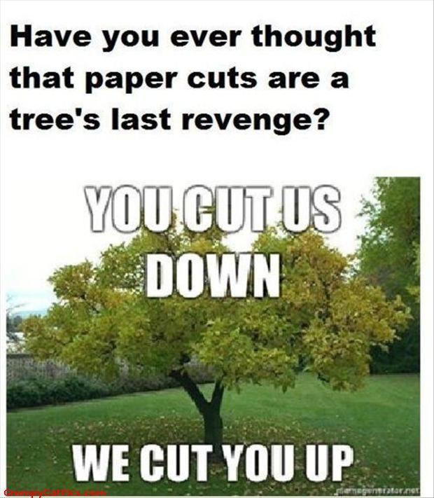 DIY Tree Limb Removal