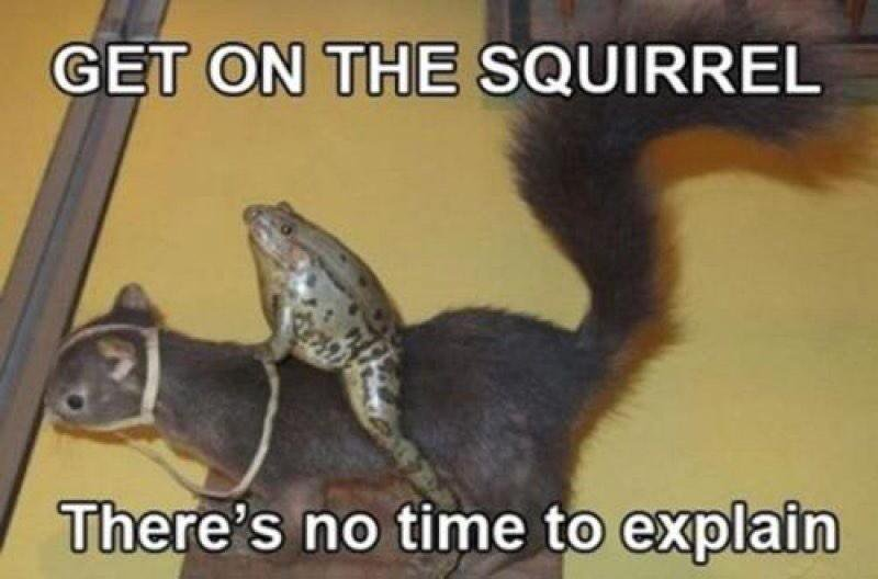 https://www.askideas.com/media/41/Get-On-The-Squirrel-Theres-No-Time-To-Explain-Funny-Squirrel-Meme-Image.jpg