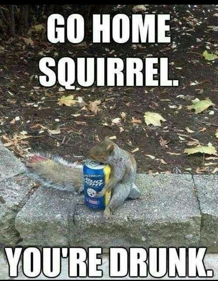 https://www.askideas.com/media/41/Go-Home-Squirrel-You-Are-Drunk-Funny-Meme-Image.jpg