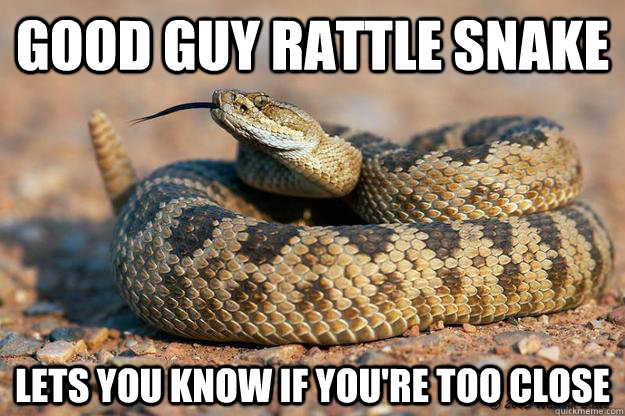 Anaconda snake meme - photo#11